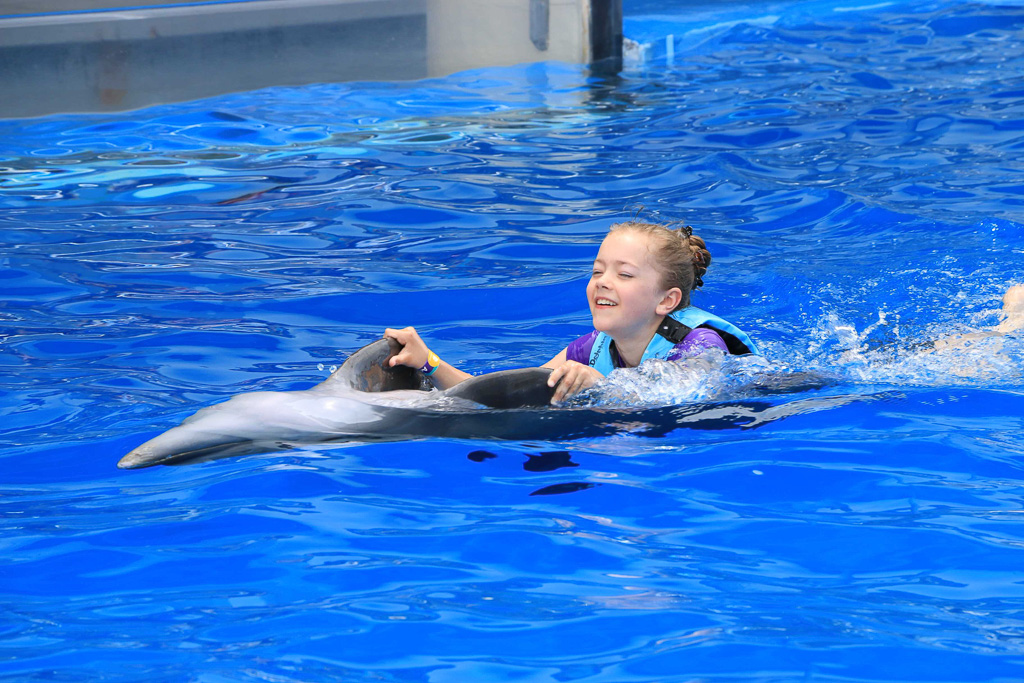 Swimming with Dolphins - Gulf World, Panama City, FL