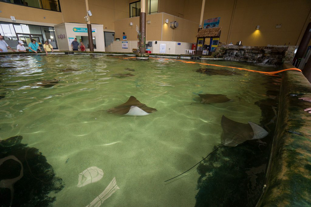 Stingray Bay - Gulf World, Panama City, FL